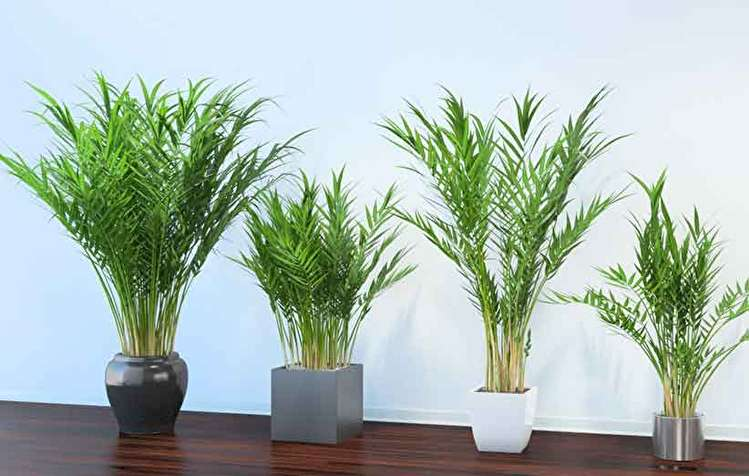 گیاهان تصفیه کننده هوا؛ ۱۰ گیاهی که سموم هوای اتاق را از بین میبرند