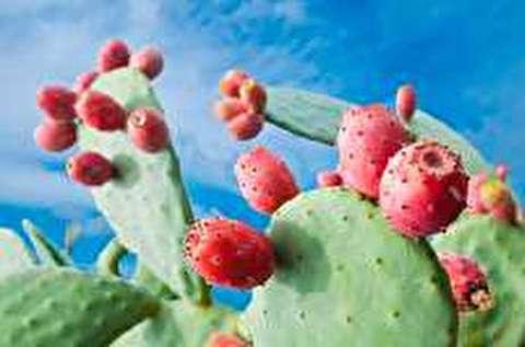 میوه کاکتوس، میوهای عجیب با خواص باورنکردنی