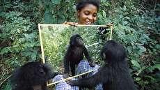 واکنش حیوانات گوناگون پس از قرار گرفتن در برابر آینه