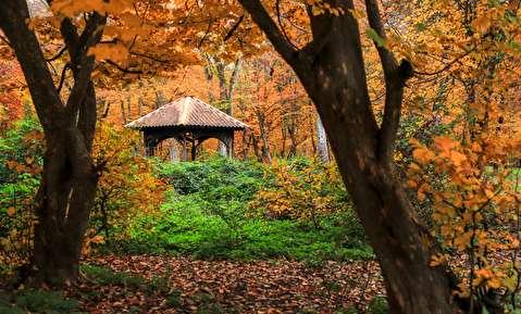 (تصاویر) طبیعت پاییزی جنگل گلستان