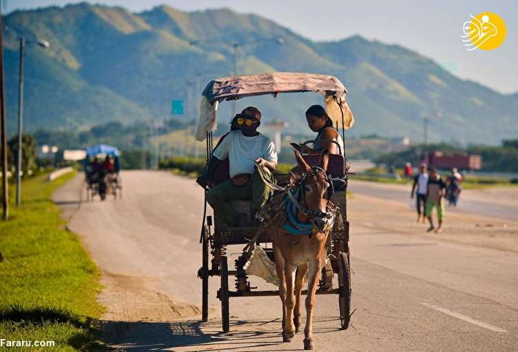 (تصاویر) کمبود سوخت در کوبا؛ مردم اسب و گاو سوار شدند