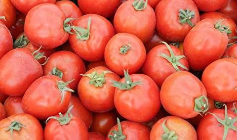 هزار وعده خوبان، یکی گوجهفرنگی را ارزان نکرد؟