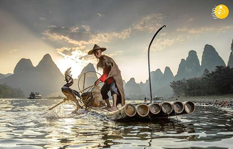 (تصاویر) روش عجیب ماهیگیری با پرنده!