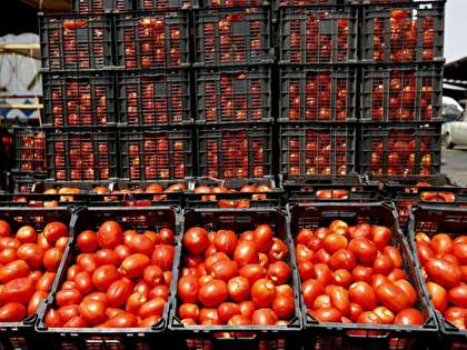 چرا قیمت گوجه ۱۰ برابر شد؟
