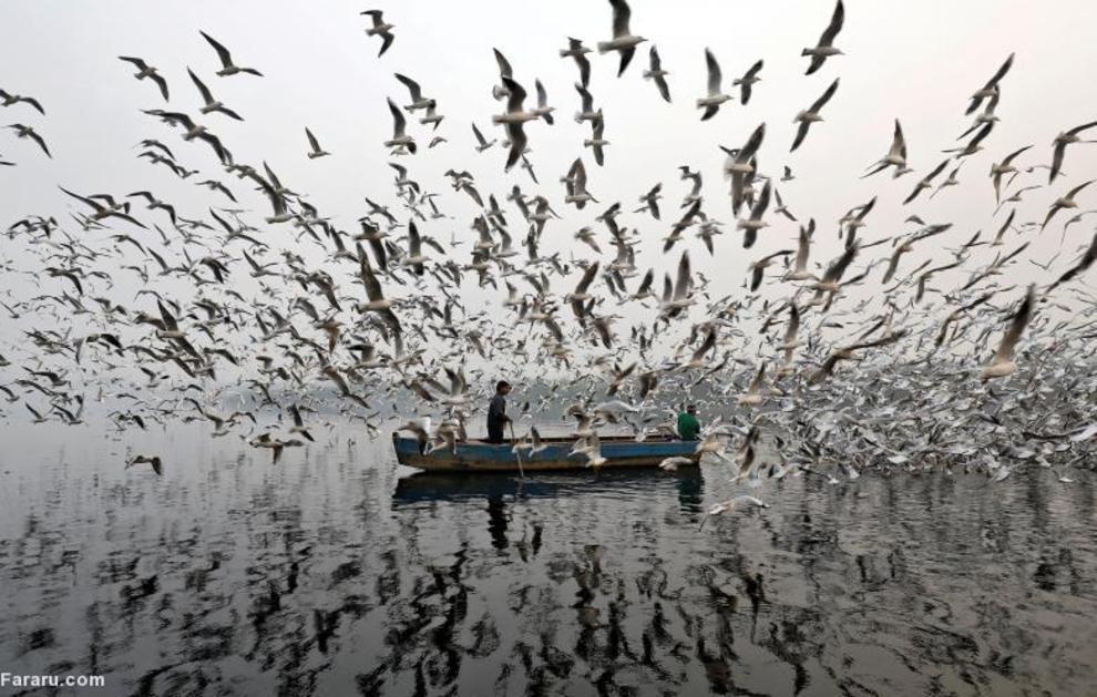 غذا دادن به پرندگان در امتداد رودخاانه دهلی نو