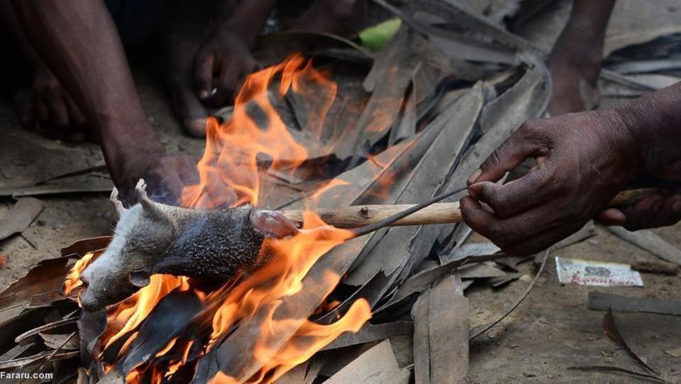 کشاورزان هندی گاهی برای امرار معاش موش میخورند!