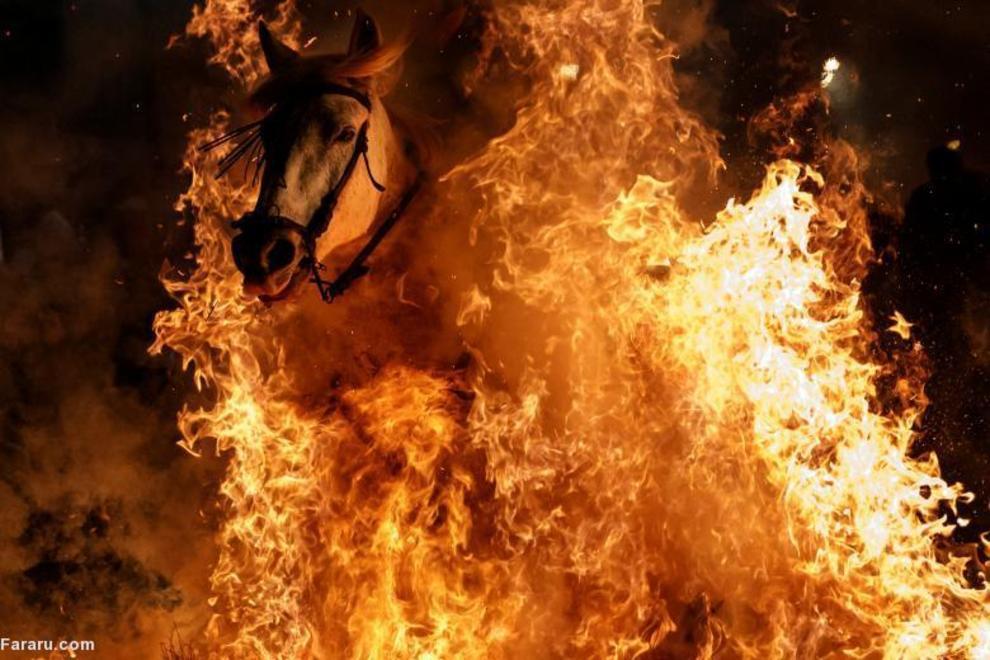 (تصاویر) جشن اسپانیایی عبور اسبها از آتش|2799340