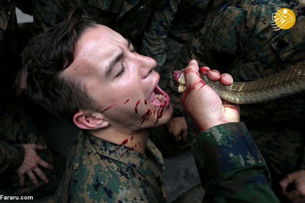 (تصاویر) خوردن خون مار کبرا توسط تفنگداران دریایی