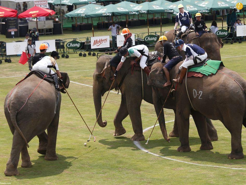 مسابقات خیریه چوگان با فیل در تایلند