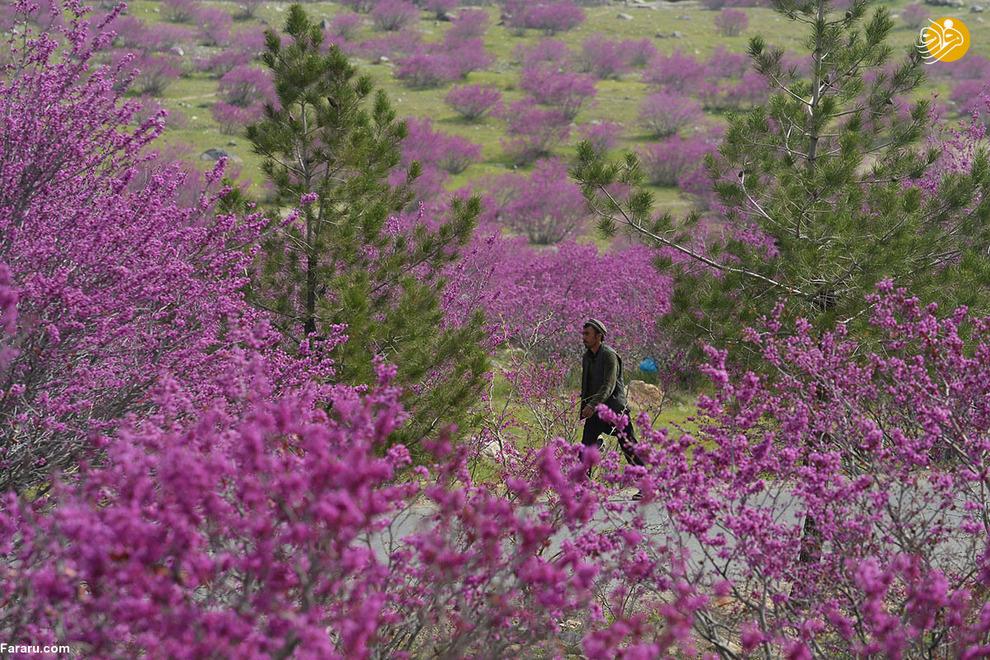 مرد افغان در پارک گل گندی در شمال کابل