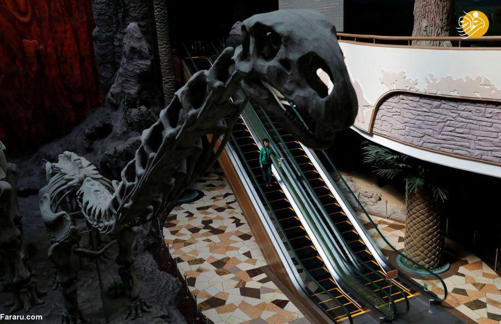 زنی در حال پائین آمدن از پلکانبرقی در موزه تاریخ طبیعت پیونگیانگ