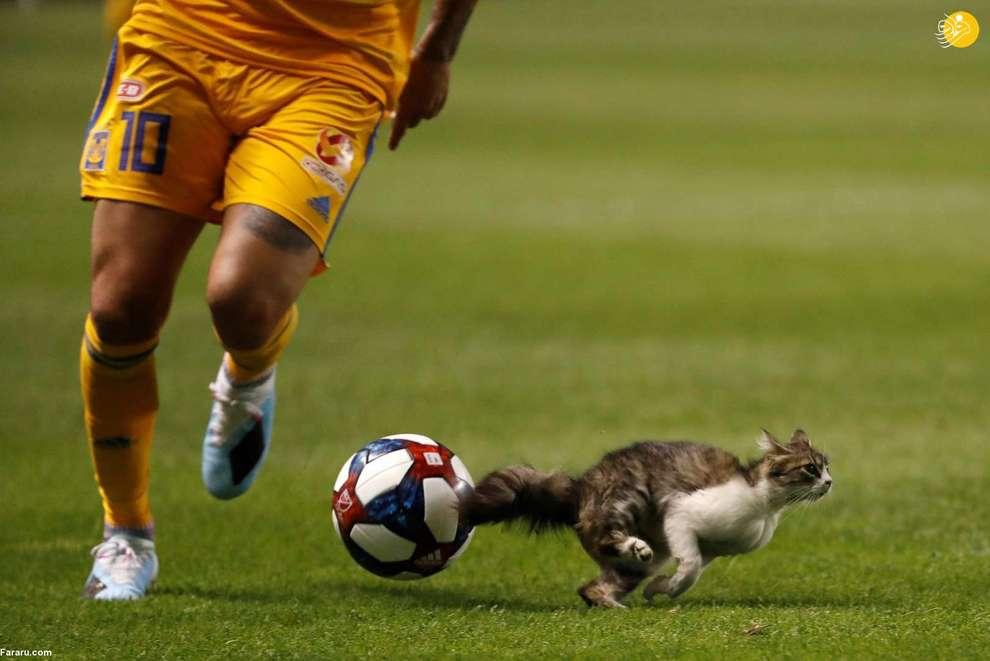 ورود گربه به زمین بازی در جریان برگزاری یک مسابقه فوتبال در آمریکا